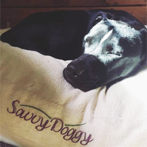 Mardi sleeps so well on her Savvy Doggy organic dog bed