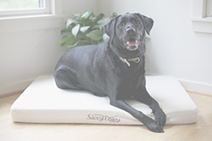 Organic dog bed, the Savvy Doggy