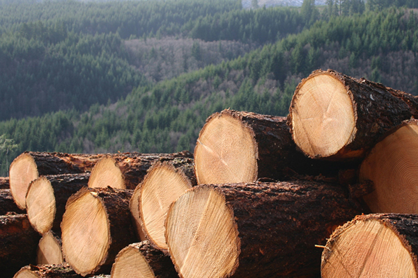 Why Sustainability Is Important To The Timber Industry