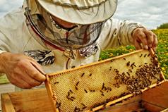 BCakes honey