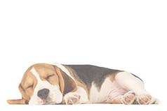 natural pet beds