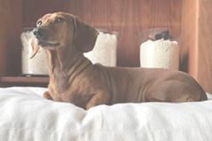 organic pet beds