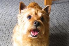 Smiling dog at Savvy Rest in Charlottesville, VA