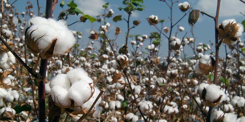 organic cotton & wool