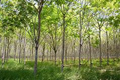 Lush, green trees.