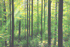 the meaning of 5,000 trees