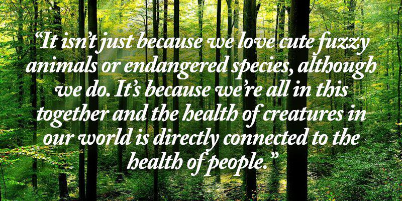 the importance of trees to the environment