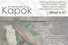 What is kapok?