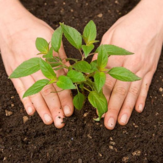Planting a tree in the soil