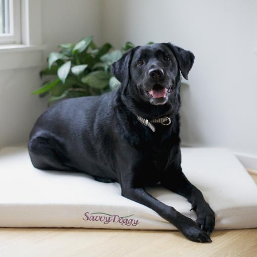 Organic dog bed by Savvy Rest