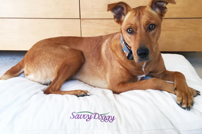 Savvy Doggy organic dog bed from Savvy Rest