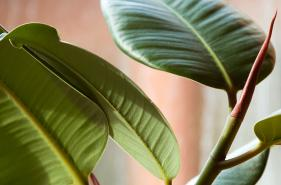 Plants as natural air purifiers.