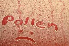 Lots of pollen